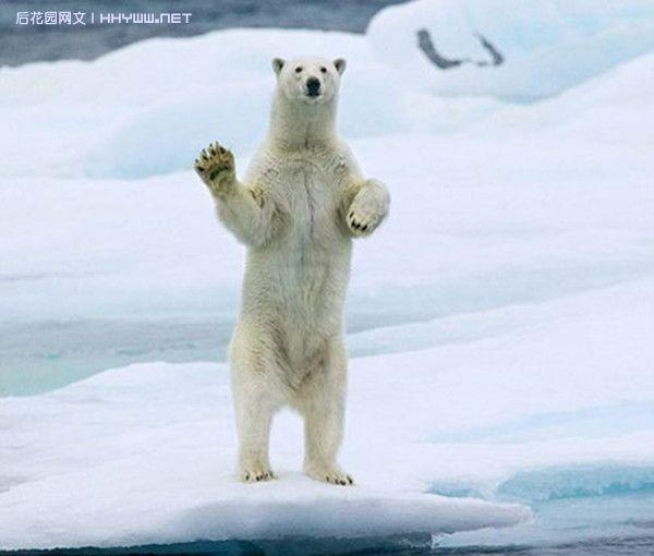 全球动物最给力表情大集合