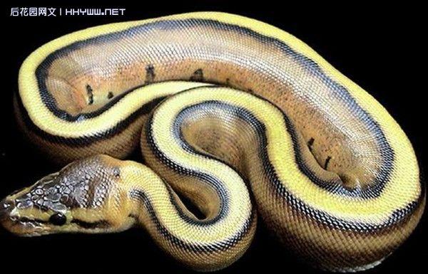 世上最可爱的蛇