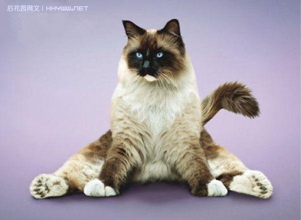 """『动物世界』""""瑜伽猫""""搞笑健身两不误"""