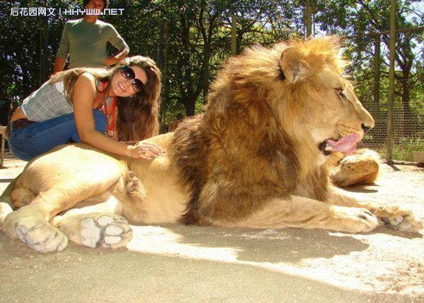 『动物世界』人与猛兽的和谐相处