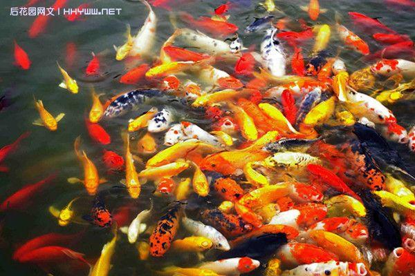 鱼在水里游的动态壁纸内容鱼在水里游的动态壁纸