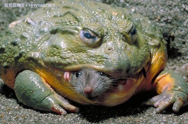 『动物世界』2010年度叹为观止的动物照片