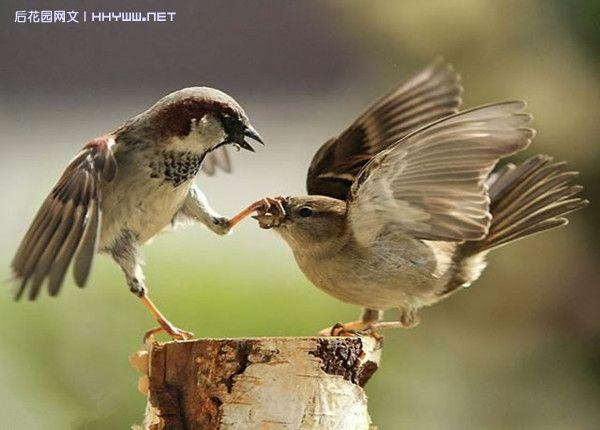 2010年度叹为观止的动物照片