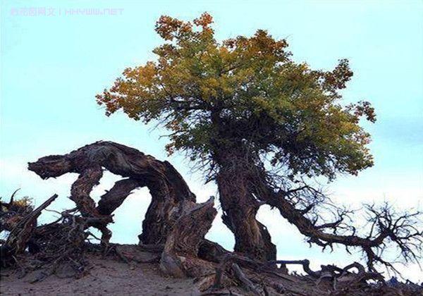 全球怪树大收集